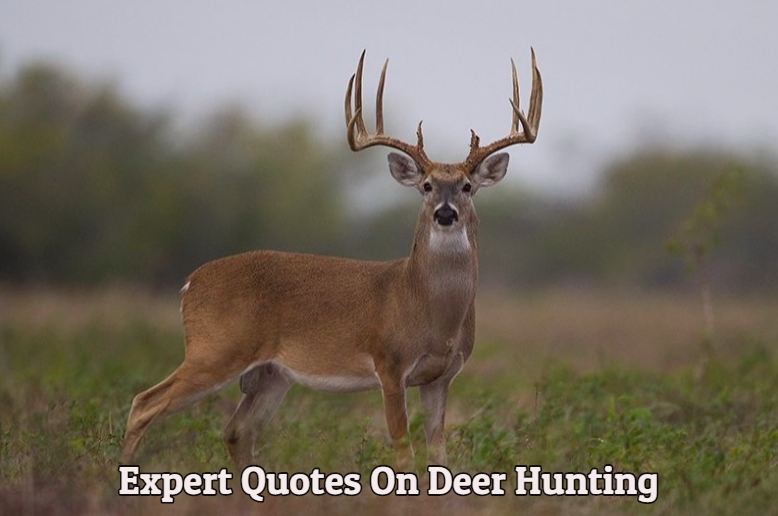 Hunting Games: Top Expert Quotes On Deer Hunting